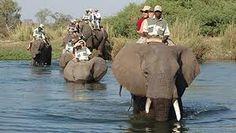 Elephant Back Safari - Victoria Falls, Zimbabwe