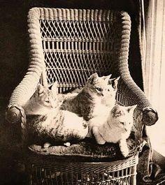 Sunshine kitties