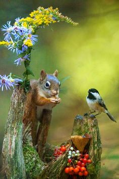 """"""" By Andre Villeneuve """" and pets runescape, and pets questionnaire example questions, pets and cambodian people characteristics, animals and pets new ssid. Good Morning Beautiful Flowers, Beautiful Birds, Animals Beautiful, Woodland Creatures, Cute Creatures, Beautiful Creatures, Cute Funny Animals, Cute Baby Animals, Funny Dogs"""