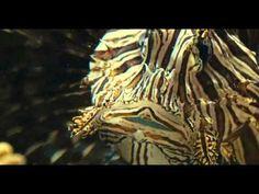 Oceanos - Dublado - Documentario - Completo - Canal Snaiper