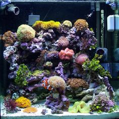 Can't wait to get to Florida and start a new reef tank