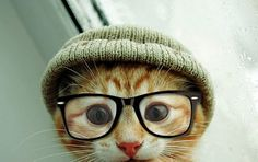 30 Most Funniest and Beautiful Dogs and Cats with Spectacle. Follow us www.pinterest.com/webneel/funny-pictures