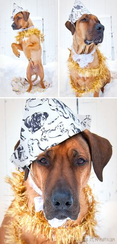 Funny Dog Pictures - Funny Pictures Of Dogs - SeriousFiver All About Animals, Like Animals, Cute Funny Animals, Funny Dogs, Cute Dogs, Puppy Party, Rhodesian Ridgeback, Funny Dog Pictures, Hound Dog