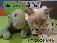 Lost on 02 Aug. 2015 @ Salmon Arm BC. Our daughter lost her beloved plush dino, named Lisa. She's green with a pink belly and white dots on her body. She's a well loved Ty dinosaur. May have lost her in Salmon Arm, or during our trave... Visit: https://whiteboomerang.com/lostteddy/msg/ifbzsy (Posted by Jessica on 09 Aug. 2015)