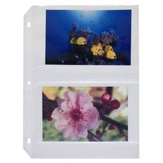 C-Line Ring Binder Photo Storage Pages for 4 x 6 Inch Photos, Side Load, 4 Photos/Page, 50 Pages per Box (52564) C-Line http://www.amazon.com/dp/B000078CSS/ref=cm_sw_r_pi_dp_W3MDvb072J4BF