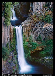 Basalt columns and Toketee Falls. Oregon, USA