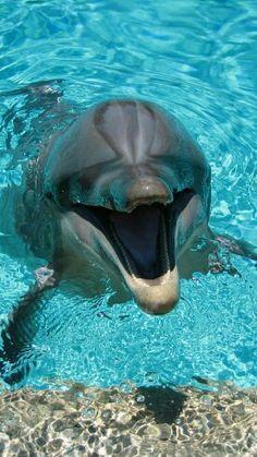 Dolphin Photos, Dolphin Art, Funny Dolphin, Dolphin Pose, Tier Wallpaper, Animal Wallpaper, Iphone Wallpaper, Camera Wallpaper, Mobile Wallpaper