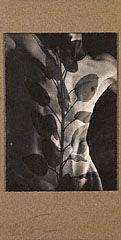 IOWA. Nude, Davenport, Iowa, Composite with Leaves, Edmund Teske, negatives 1941 and 1946, print 1960s. © Edmund Teske Archives/Laurence Bump and Nils Vidstrand, 2001