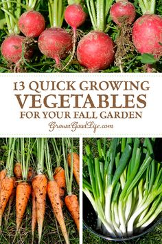 As fall approaches, most of the summer crops begin to wind down. Instead of watching your summer crops struggle to ripen the last few fruits, pull them out and plant some of these quick growing vegetables for your fall garden. #vegetablegarden #fall #growfood