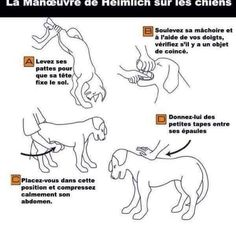 """""""Heimlich Maneuver for pets? Then take your pet directly to the Vet. Please this pass on! Dog Care Tips, Pet Care, Pet Tips, Heimlich Maneuver For Dogs, Dog Heimlich, First Aid For Dogs, Dog Hacks, Pet Health, Health Care"""