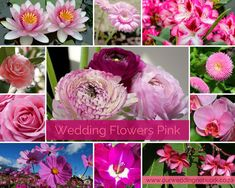 Wedding Flowers-Pink Inspiration Wedding Blog, Our Wedding, Wedding Flowers, Wedding Inspiration, Weddings, Rose, Plants, Pink, Bodas