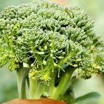 Cura cu semințe de SUSAN și MIERE, pentru cei cu lipsă de CALCIU sau alte MINERALE | La Taifas Broccoli, Cancer, Food, Essen, Yemek, Meals