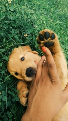 Golden Retriever Pup ~ Classic Look Animals And Pets, Baby Animals, Funny Animals, Cute Animals, Cute Puppies, Cute Dogs, Dogs And Puppies, Doggies, Background Grey