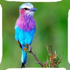 "Blue purple feather exotic bird tree pillow cushion cover 18"" 2 side handmade | eBay"