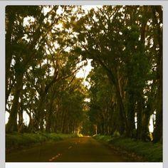 Driving Through Kauai