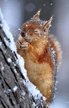 des flocons un écureuil ๏ some flakes a squirrel