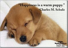 Quotes About Pet Dogs | Why We Love Cats and Dogs ~ Important Pet Quotes in History | Nature ...
