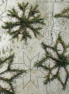 DIY Pine Tree Snowflakes