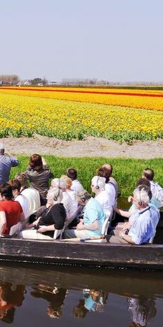 オランダ キューケンホフ公園(Keukenhof the Netherlands) Couple Photos, Couples, Flowers, Couple Shots, Couple Photography, Couple, Royal Icing Flowers, Flower, Florals
