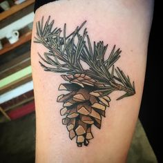 """2,696 Likes, 25 Comments - Alice Kendall (@alicestattoos) on Instagram: """"#pine #branch with #pinecone for Beth! Thanks for coming in Beth! #botanicaltattoo #portlandtattoo…"""""""