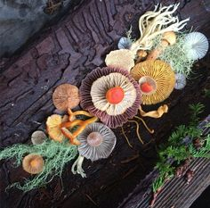 Fungi arrangement by Jill Bliss