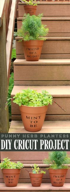 Add a little humor to your herb garden this summer with these Punny Herb Planters! It's an easy project to make on your Cricut or with premade vinyl stickers. Raised Herb Garden, Herb Garden Planter, Herb Planters, Herbs Garden, Indoor Garden, Vegetable Garden, Herb Puns, Diy Garden Projects, Garden Ideas