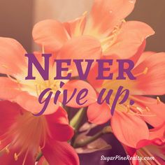 Never give up. #Quote