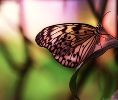 prism    wanting comfort  I peered through wings of glass  to see the future     but instead of the future,  color began breaking  into a bouquet of time     Hours  Minutes  Seconds     fracturing     until it was clear  that I was inside     every moment  and was no longer  afraid       —Photo and poem by Lynn Langmade