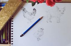 Drawing Realistic Farm Animals: Hens & Baby Chickens