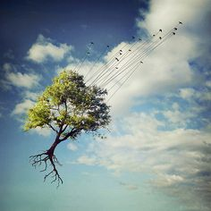 made by: Sarolta Ban - Surrealism (Birds with Strings)
