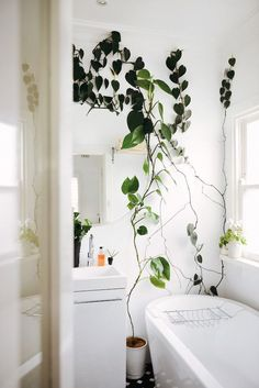 Plants in the bathroom | follow @shophesby for more gypset boho modern lifestyle + interior inspiration www.shophesby.com