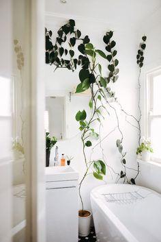 Overgrown Plants /