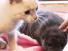 """""""Hey, uhhhh...there seems to be something wrong with this kitteh."""""""