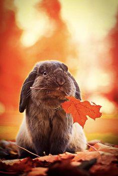 Cute Baby Bunnies, Cute Baby Animals, Animals And Pets, Hamsters, Guinea Pigs, Beautiful Creatures, Fur Babies, Cute Dogs, Bun Bun