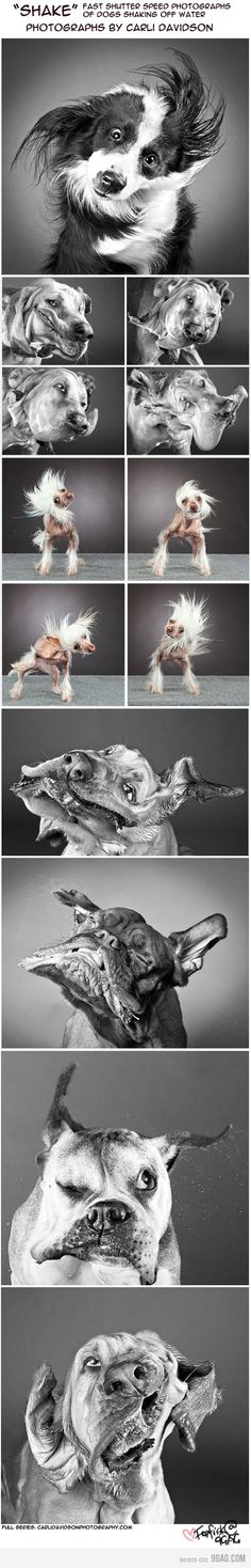 Omg! The Chinese Crested is so funny!