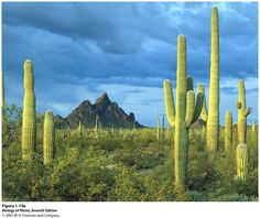 Sonoran Desert, Arizona...I love Arizona :)
