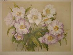 purple flowers  no. - 12