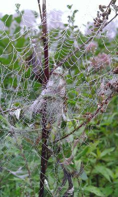 spider web scare crow ?