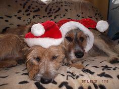 Weihnachts Elfen