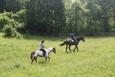 Summer and Macy take the boys for a nice walk in the field after their ride.
