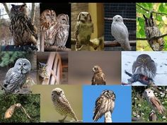 YouTube Flora, Lion Sculpture, Owl, Statue, Bird, Videos, Youtube, Exotic Birds, Animales
