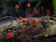 Découvrez la diversité époustouflante des champignons d'Australie   Daily Geek…