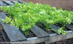 Wood Pallet Garden Can Produce An Abundance Of Vegetables, Fruits, And Herbs - http://www.homesteadingfreedom.com/wood-pallet-garden-can-produce-an-abundance-of-vegetables-fruits-and-herbs/
