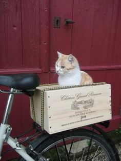 The Cat's Out of the Bag: 3 Ways to Carry a Cat by Bicycle