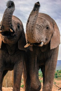 Buffelsdrift, Oudtshoorn SA - Where you can have encounters with the beautiful Elephants