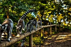 Possibly the best photo I haven taken thus far. Lemurs inside.