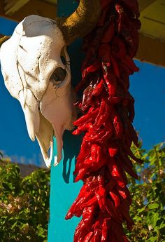 skull, chiles blue sky means New Mexico New Mexico Style, New Mexico Homes, New Mexico Usa, Mexico Art, Southwest Decor, Southwest Style, Santa Fe Style, New Mexican, Land Of Enchantment