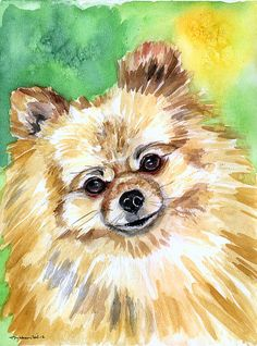 Marvelous Pomeranian Does Your Dog Measure Up and Does It Matter Characteristics. All About Pomeranian Does Your Dog Measure Up and Does It Matter Characteristics. Dog Paintings, Watercolor Paintings, Pomeranian Puppy, Yorkie, Chihuahua, Lap Dogs, Beautiful Dogs, Dog Art, Dog Life