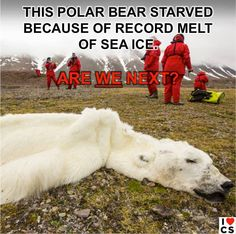 The polar bear who died of climate change - big picture.  A lack of sea ice, caused by global warming, meant the bear was unable to hunt seals and starved, according to an expert who had been monitoring the animal in Svalbard, Norway