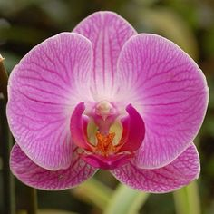 orchid close up - Google Search